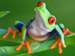 Tyke The Tree-Frog